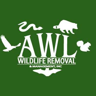 AWL Wildlife Removal - Gainesville, GA - Pest & Animal Control