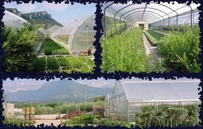 Vivai fratelli banterla vivai piante articoli da - Fratelli ingegnoli piante ...