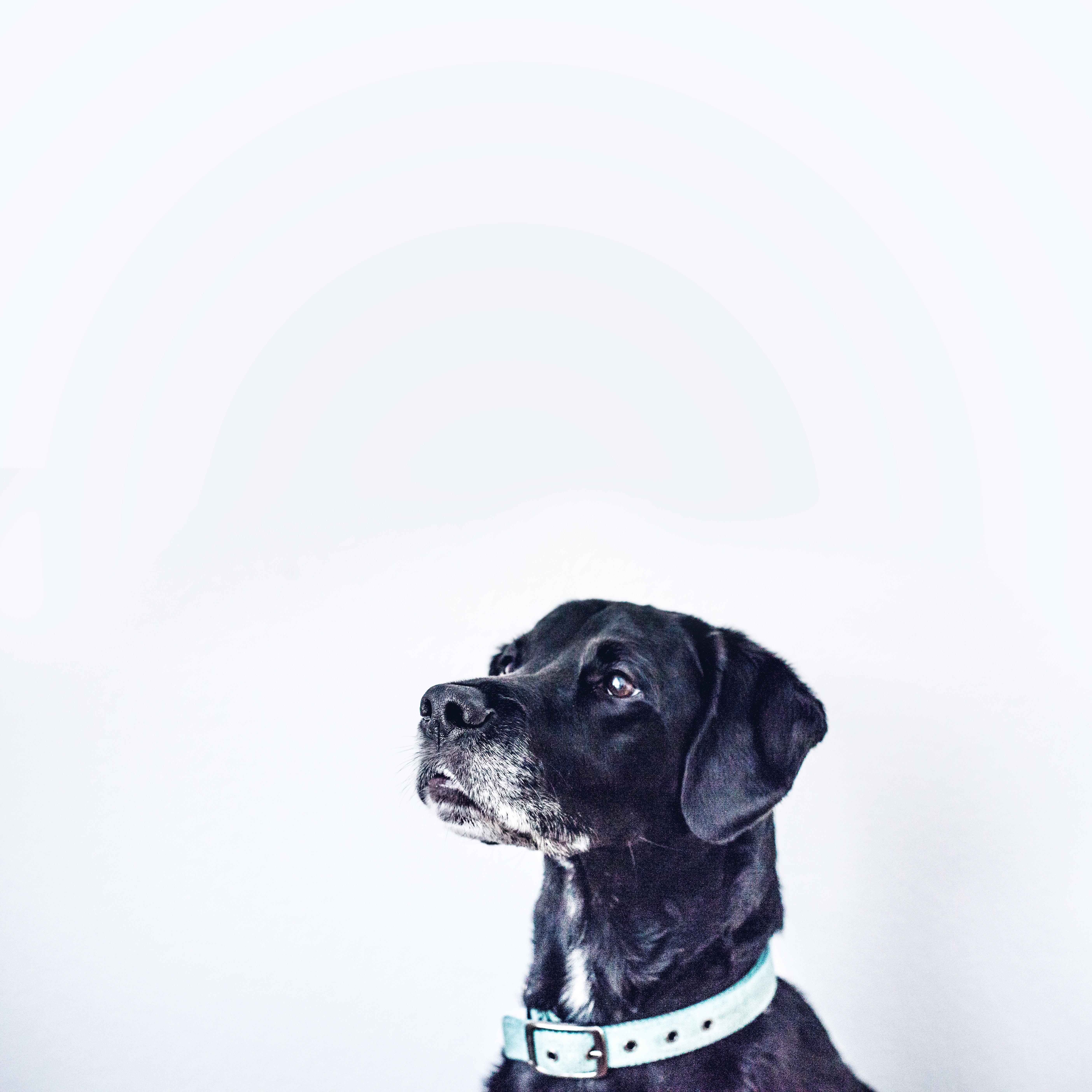 Furball Pet Care image 1