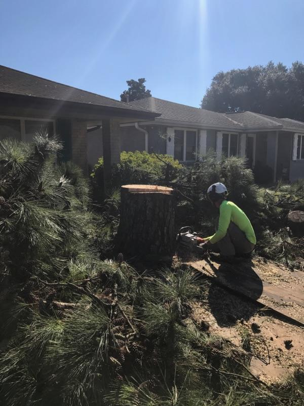 S & L Tree Service & Stump Grinding image 7