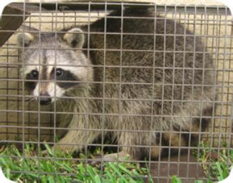 Wildlife X Team North Houston image 8