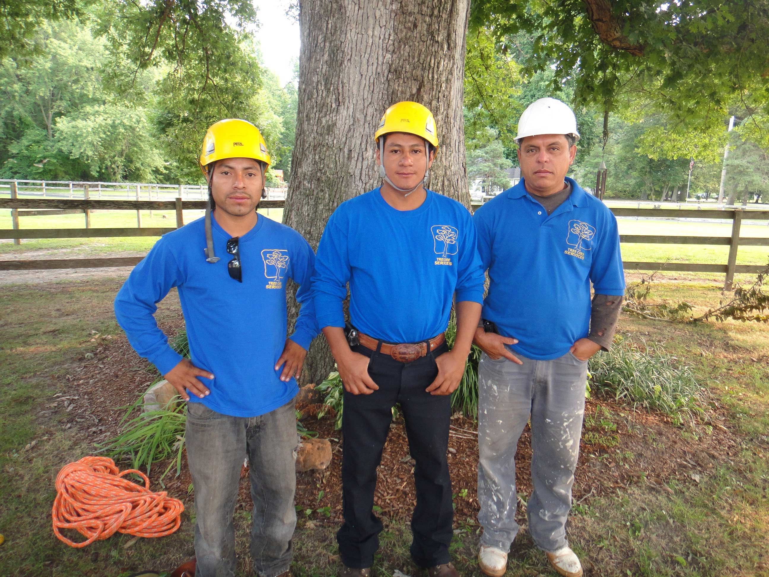 Milton's Tree Care Services image 6