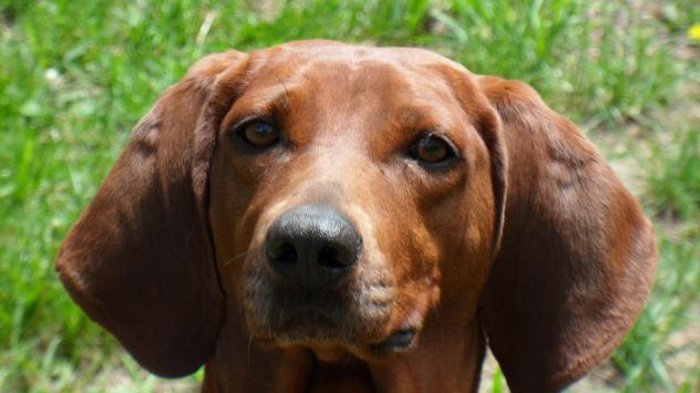 Epona Pet Care image 2