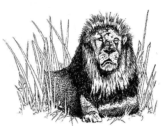 Lion In The Grass image 6
