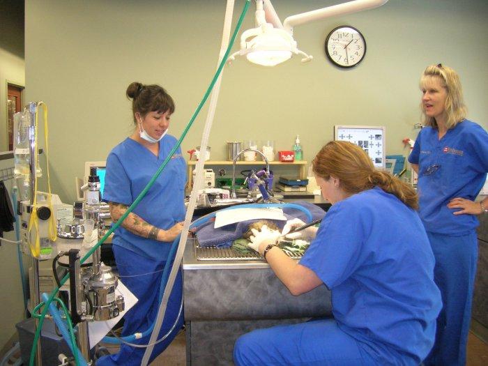 VCA Park Hill Animal Hospital image 3