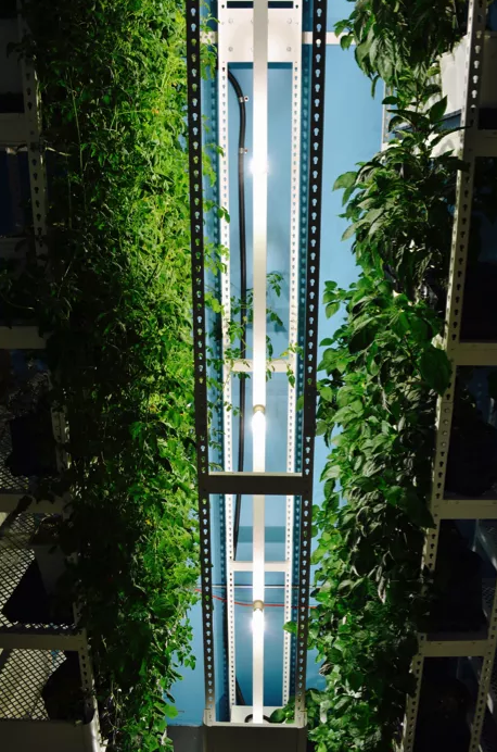 Brighterside Vertical Farms image 1