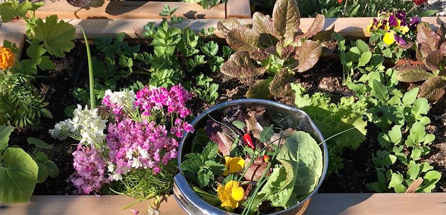 Homegrown Harvest image 1