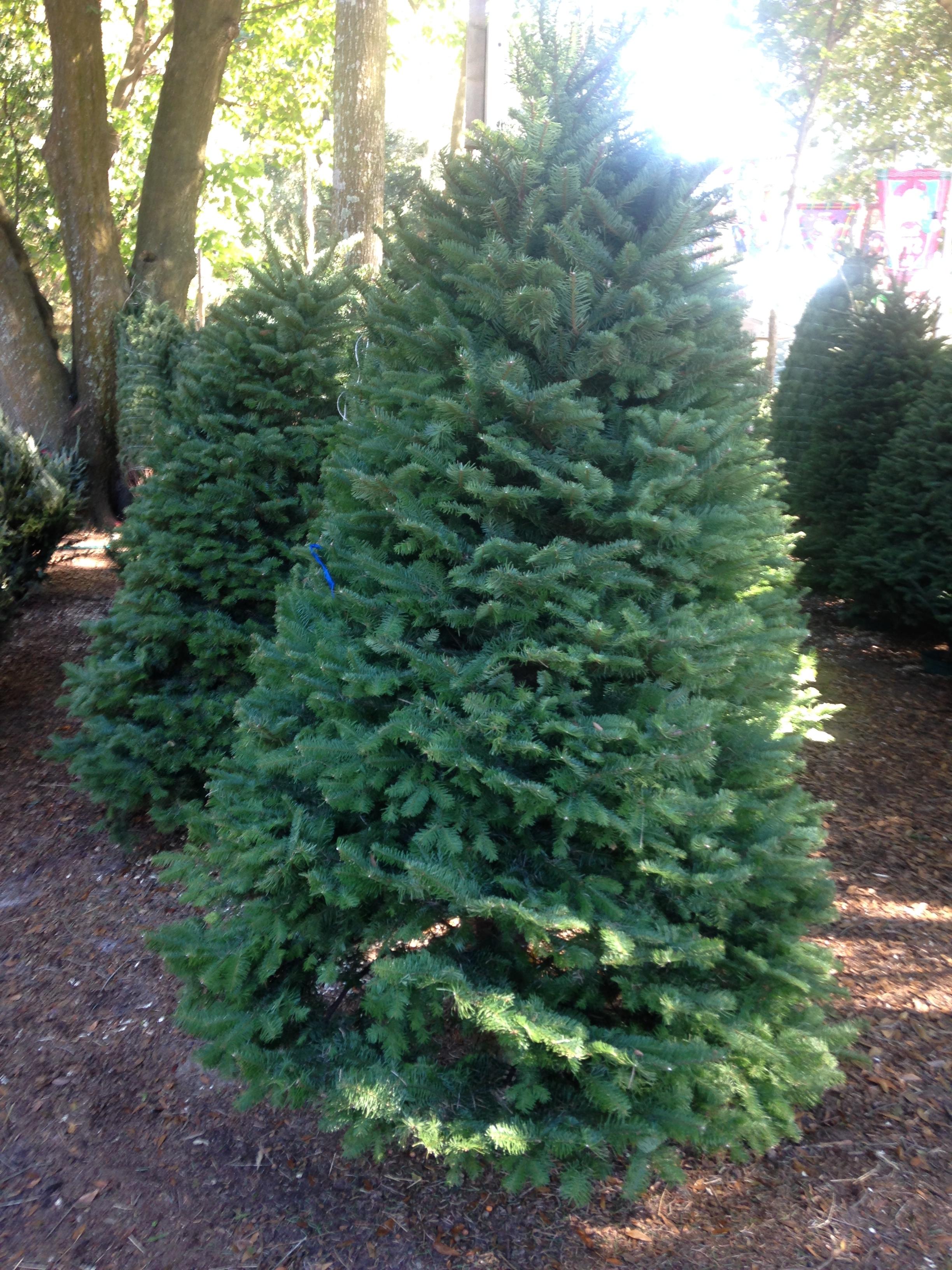 Dave's Christmas Tree Lot image 25