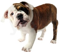 Mast Blvd Pet Care image 1
