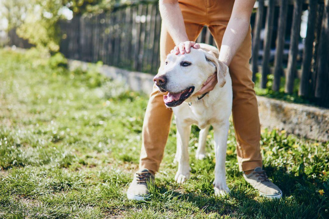 Charleston Dog Training