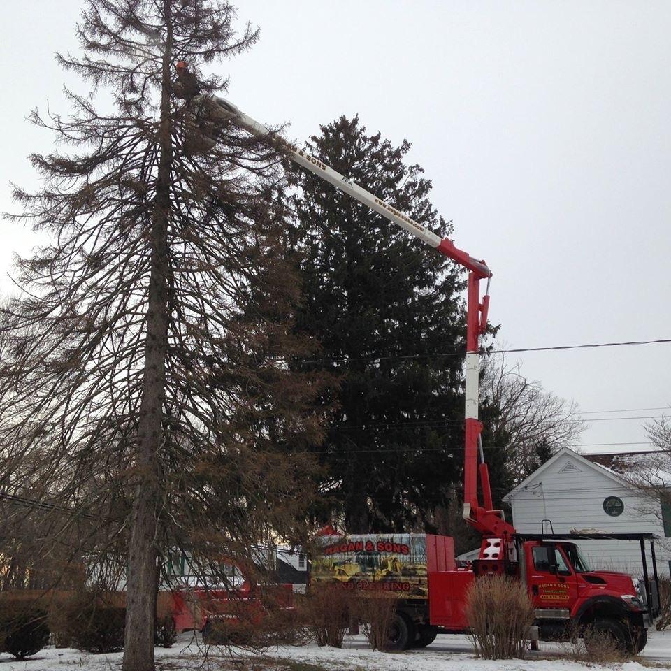 Hagan & Sons Tree Service image 1