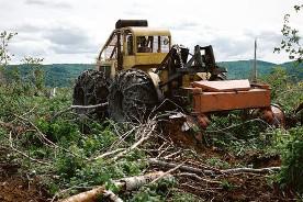 Papendieck's Tree Service image 2