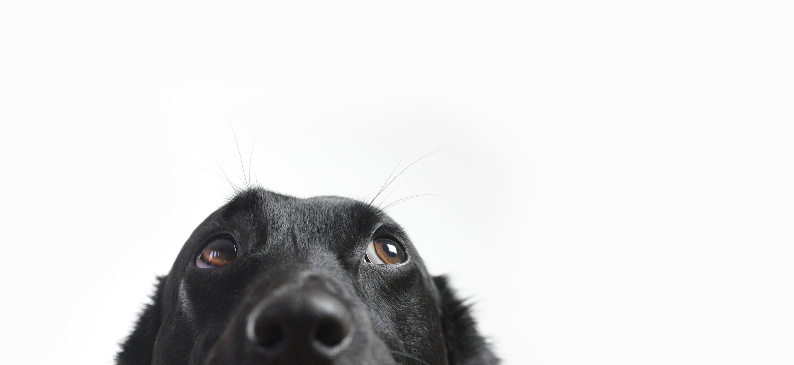 Furball Pet Care image 3