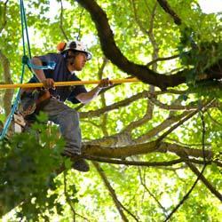 Jeff's Tree Service image 3