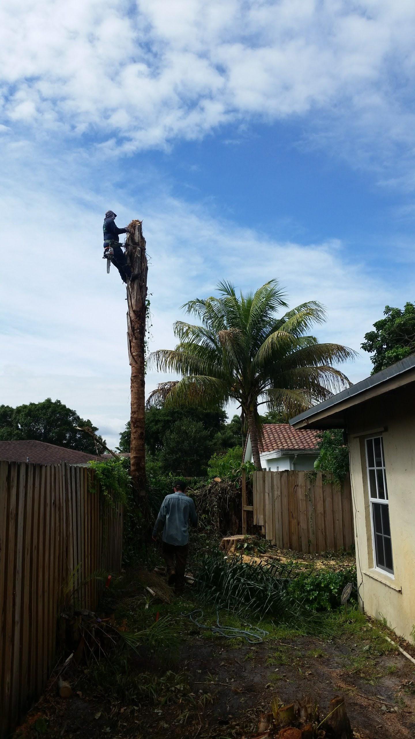Jireh Tree Care image 8