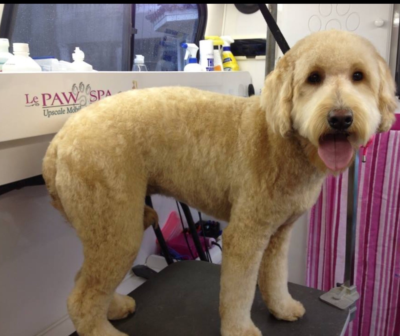 Le Paw Spa Mobile Pet Grooming image 6
