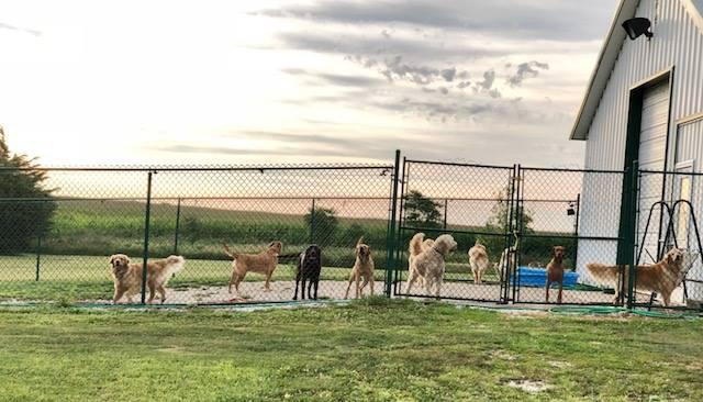 Ledges Farm Dog Camp image 10