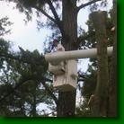 Tri-County Tree Service image 1