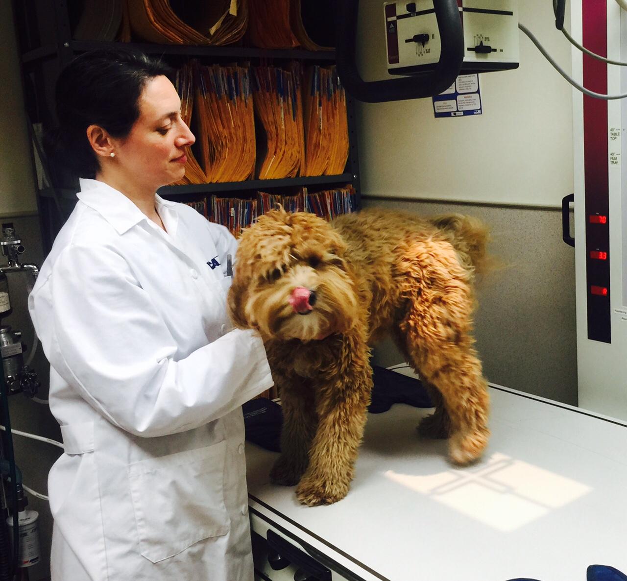 VCA Brown Animal Hospital image 12