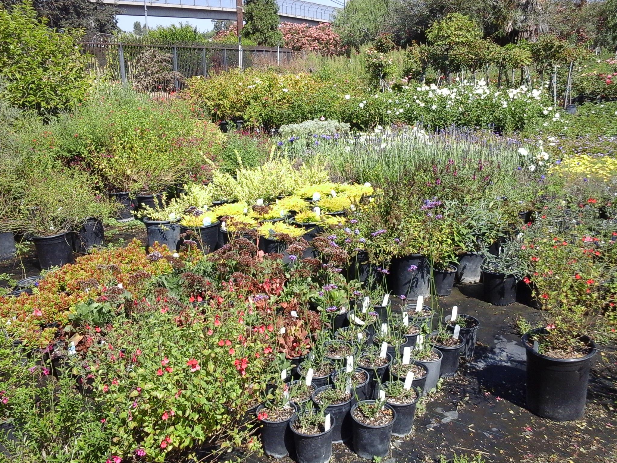 Colorful Garden Center image 4