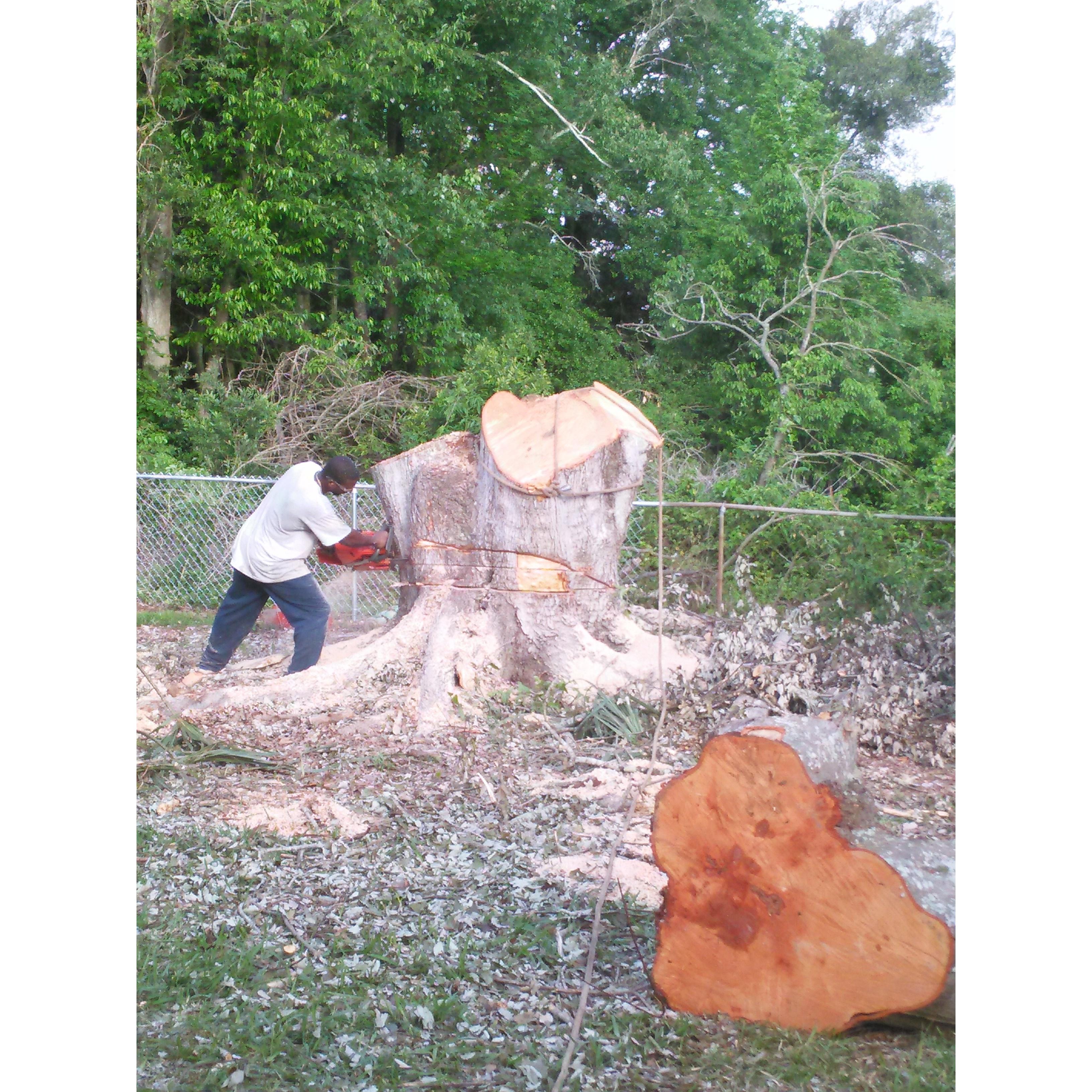 Mr. T's Tree Service