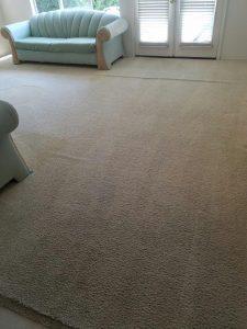 Certified Carpet Care image 3
