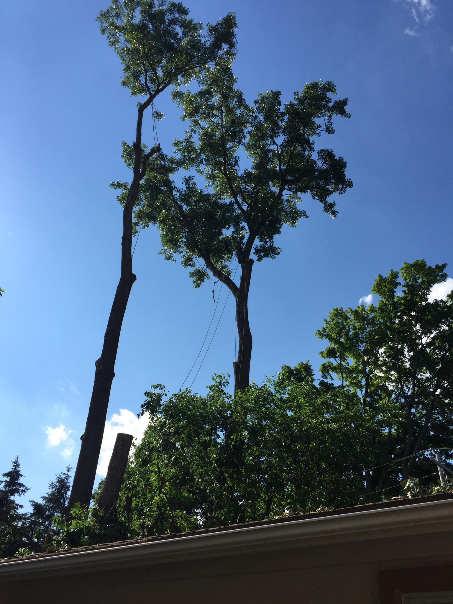 Cruz Tree Service