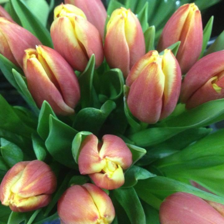 Flowerama - Omaha, NE - Florists