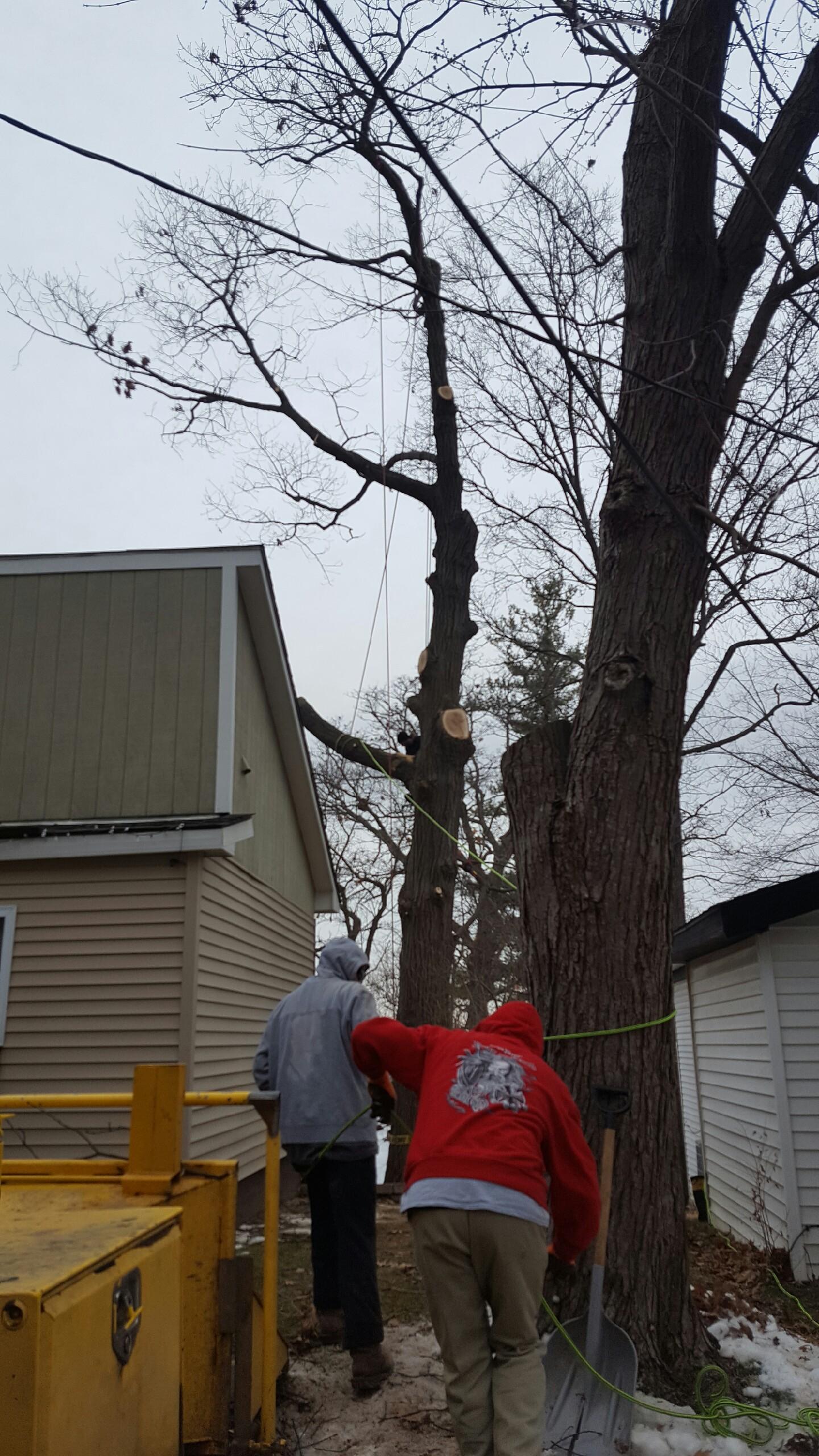 Coffman's Tree Service image 1