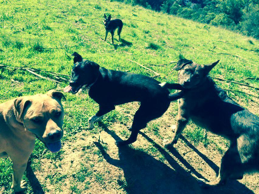 Fetch! Pet Care image 15