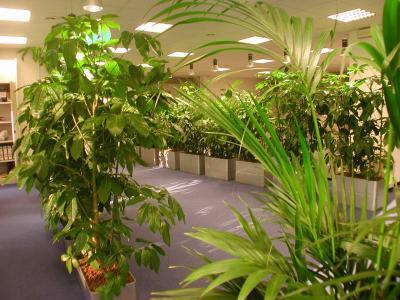 Arredoverde fiori e piante naturali ingrosso milano for Piante artificiali milano