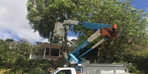 Sherwood's Tree Service