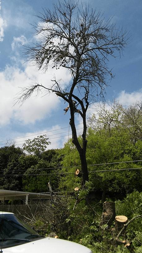 Almanza Tree Trimming Service & More image 7
