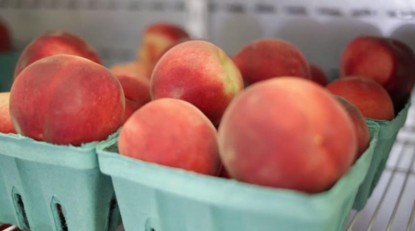 Moreland Fruit Farm image 16