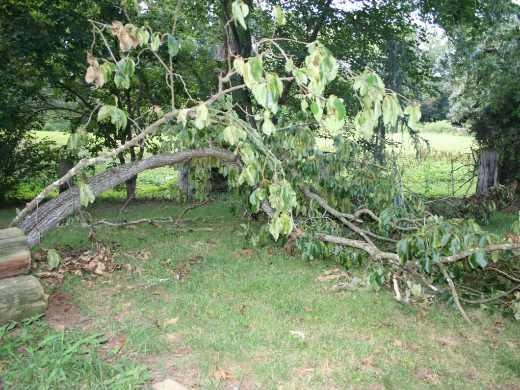 Piedmont Tree and Lawn Care image 0
