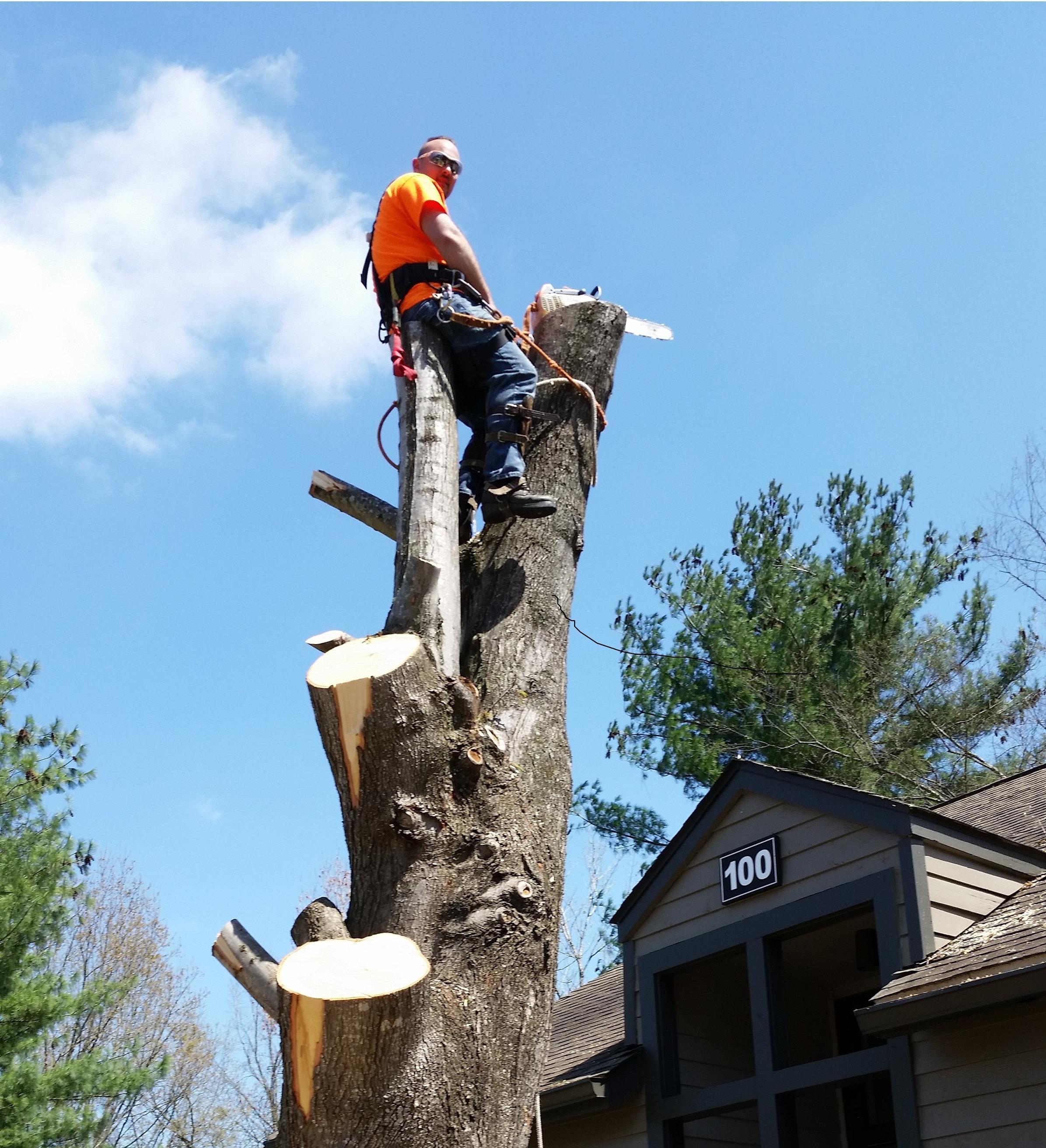 ArborJacks Tree Service image 4