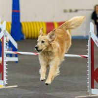 All FUR Fun Training and Event Center image 8