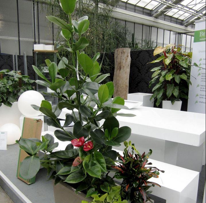 blumen und pflanzen in furth infobel deutschland. Black Bedroom Furniture Sets. Home Design Ideas