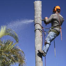 A&A Tree Service image 10