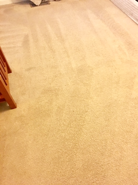 Stains Be Gone Carpet Cleaning, LLC image 1