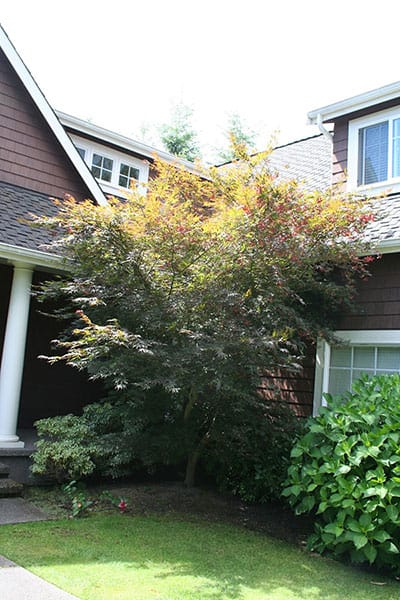 Archon Tree Services, Inc. image 21