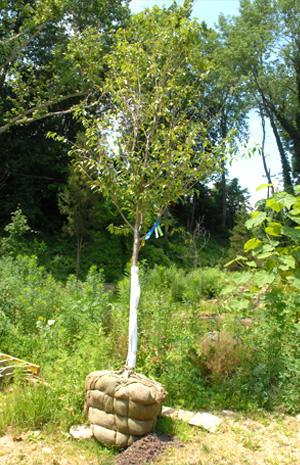 D. Follett Tree Service & Landscaping image 2