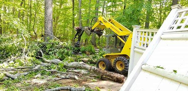 Affordable Tree Experts LLC image 5