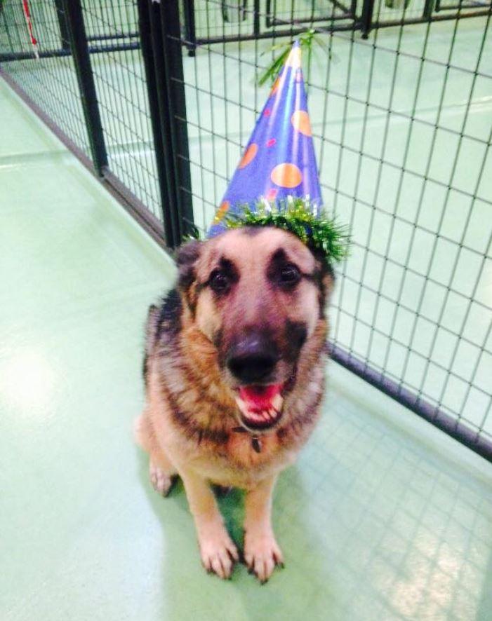 Doggie Daycare & Motel image 6