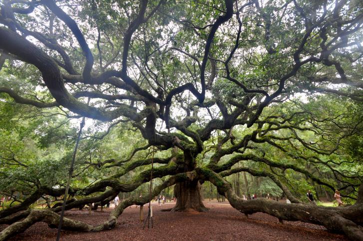 Tree Experts, Inc. image 0