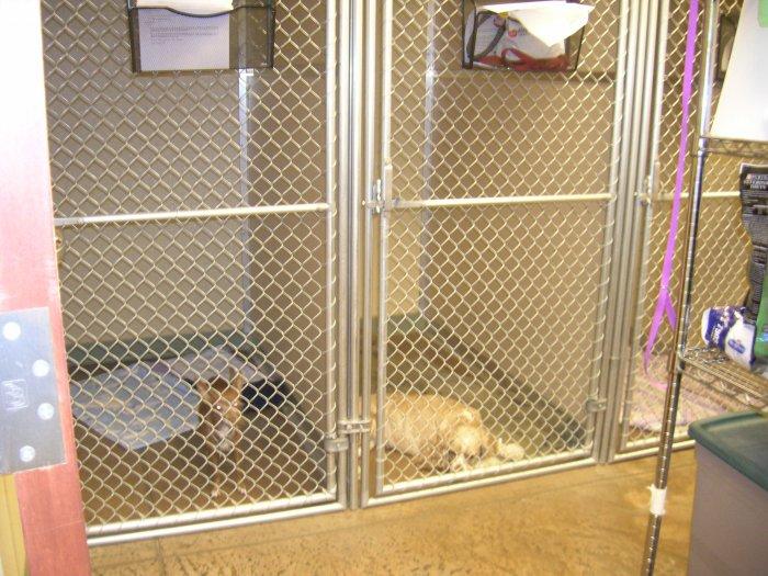 VCA Park Hill Animal Hospital image 2