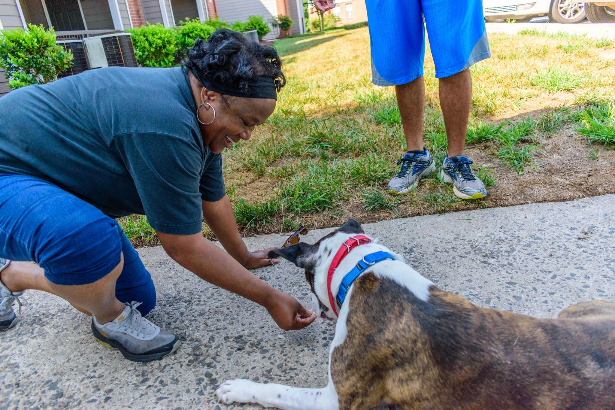 Pawfect K9 Dog Training Services, LLC