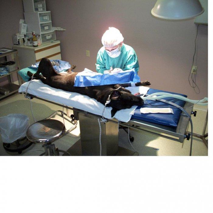 VCA Wellington Animal Hospital - CLOSED image 3