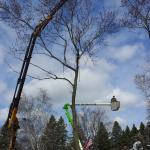 Russ's Tree Service image 3