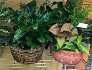 Wabash Valley Flower Shop image 4